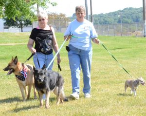 """Linda Short (left) and Rosemary Allen """"strut"""" with their dogs during the Carroll County Animal Protection League's Critter and People Strut June 18 at the county fairgrounds. Short and her dog, Ace, and Allen and her dogs, Sadie (middle) and Chi Chi, were headed for the watering bowls and a shade tree. Ace was named the winner of a dress-up contest held in conjunction with the strut."""