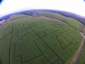 jewett-corn-maze